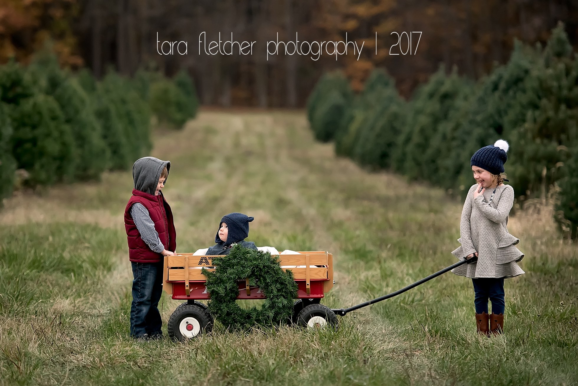 It S The Most Wonderful Time Of The Year 2017 Tree Farm Mini Sessions Southwest Michigan Family Photographer Tara Fletcher Photography West Michigan Child And Family Photographer